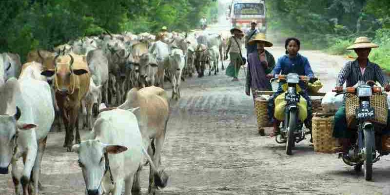 Que ver en Biramnia