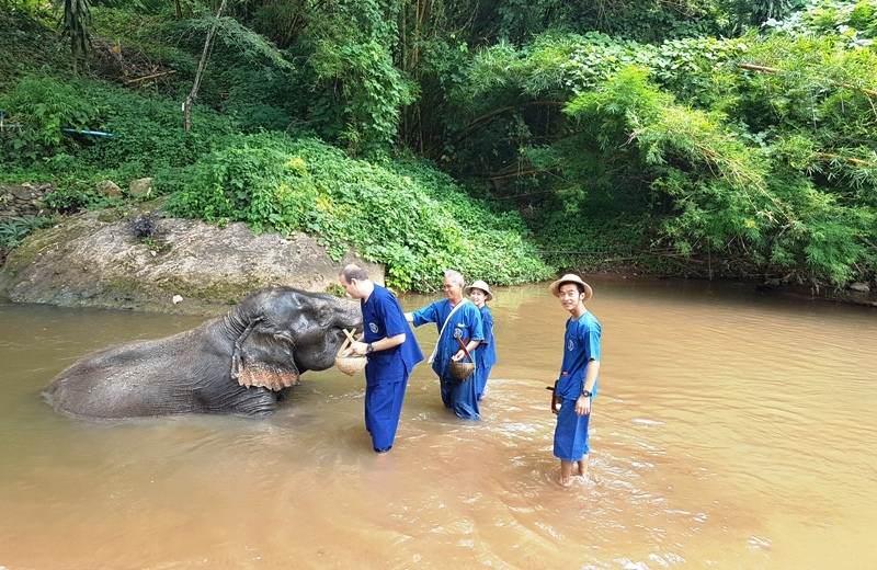 Campo Elefantes Chiang Mai