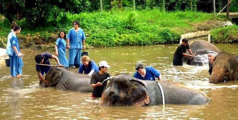 Elefante sexo condenado Tailandia