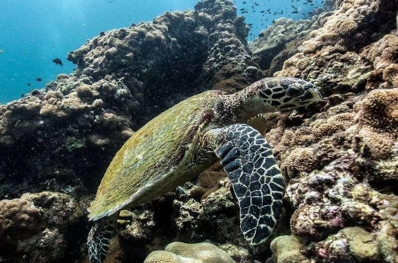 Los mejores lugares de buceo en Tailandia