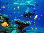 Mejores sitios para bucear en Tailandia
