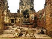 Templo de los monos en Lopburi Tailandia