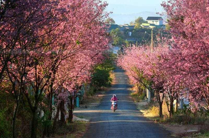 La epoca  de primavera en Vietnam