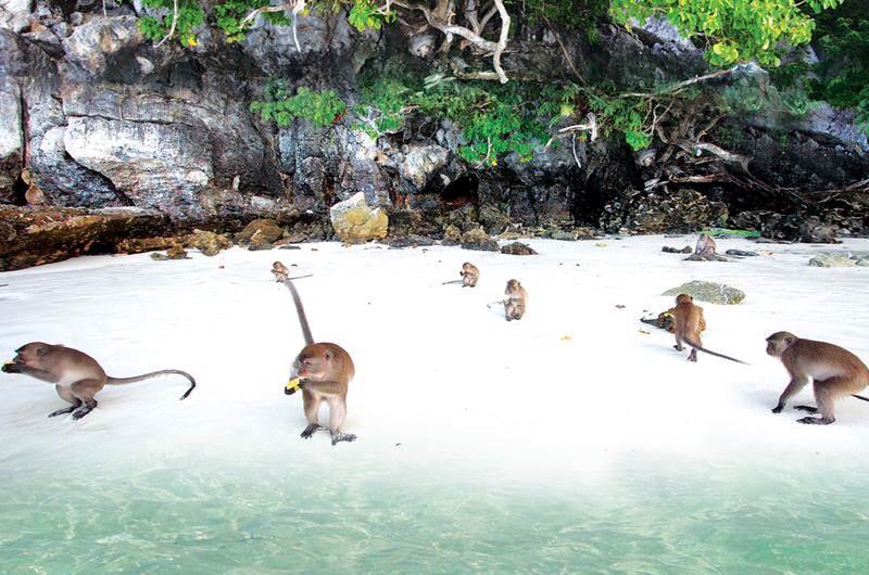 La playa de los Monos en Tailandia