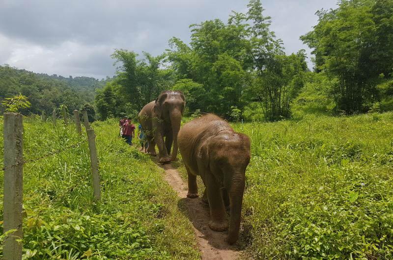 Elephant Eco Valley Chiang Mai