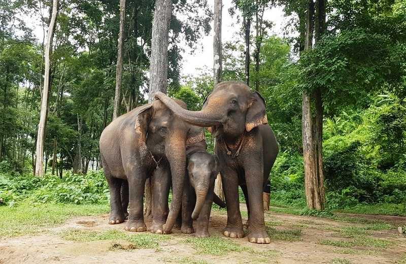 Campo Elefantes Chiang Mai Happy Elephant Camp