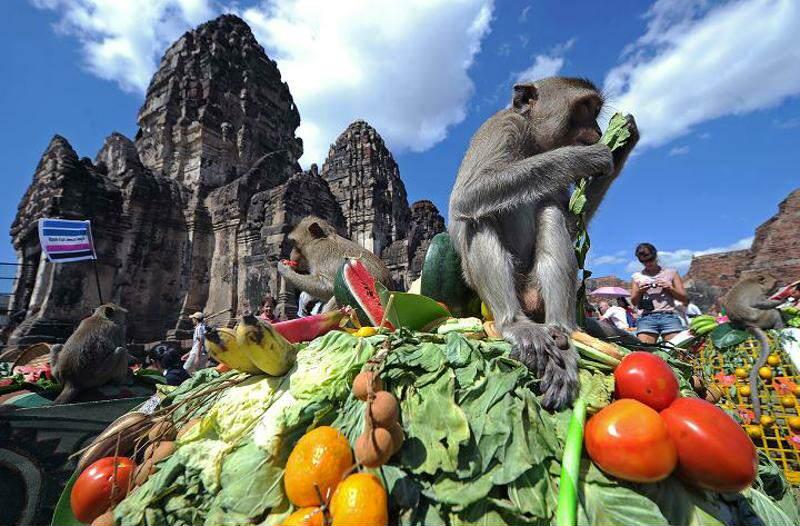 Festival de los monos de Lopburi